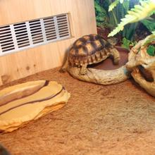 LanLan 60*40 см домашнее животное натуральный кокосовый мат ящик для рептилий украшения дышащие постельные принадлежности линия-30