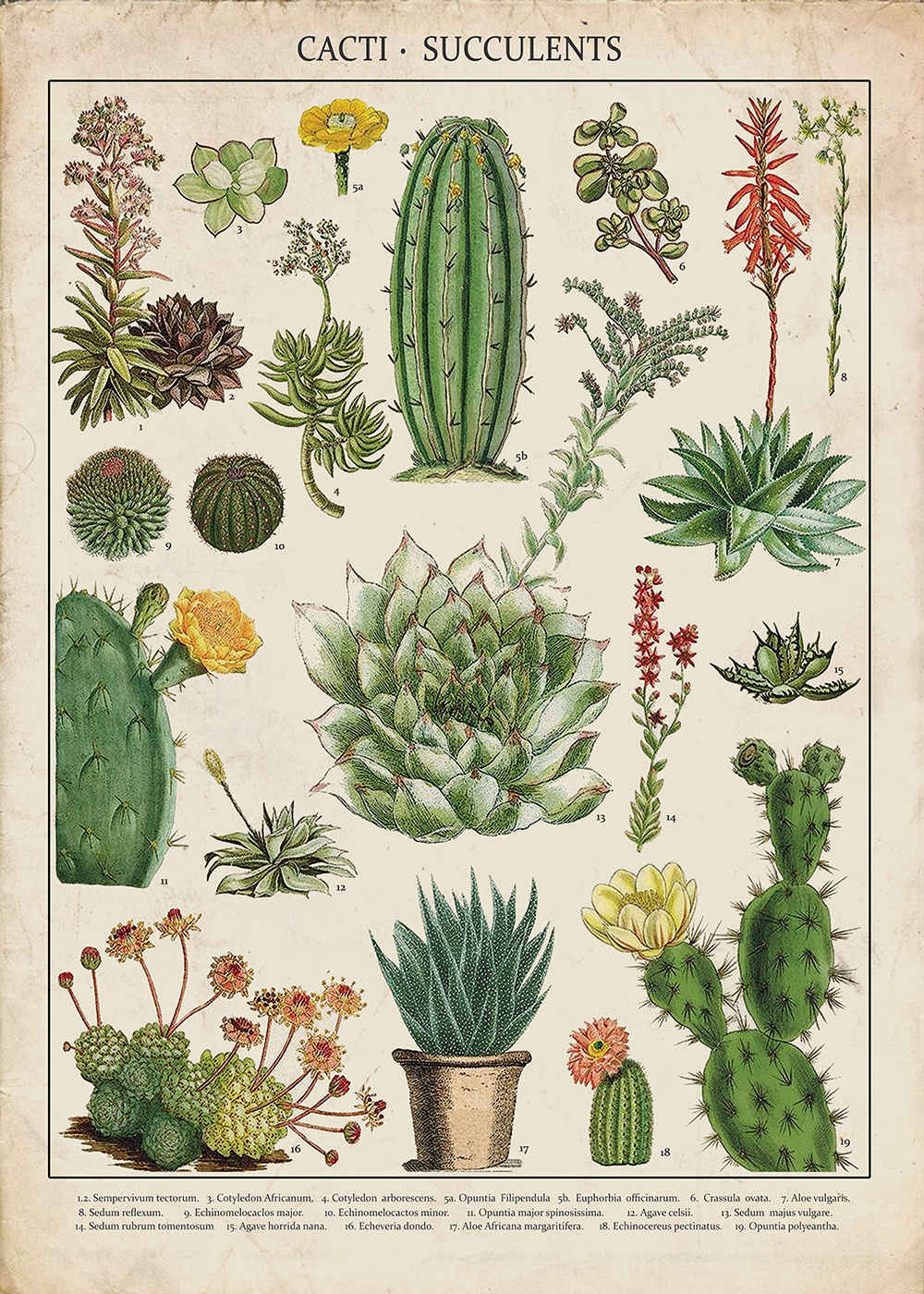 Cacti & Succulents Kitchen - Vintage Art Print SILK POSTER Decorative painting  Wall painting 24x36inch