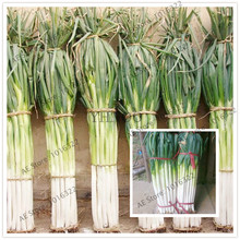 101 pcs/bag giant green onion seeds Organic seeds vegetables Kitchen ingredients bonsai pot plant for home garden easy to grow(China)