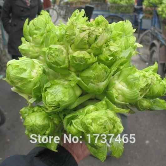 1000 шт (8 г)/оригинальный пакет ercai растительного Бонсай завод для Домашнего Цветоводства Бесплатная доставка