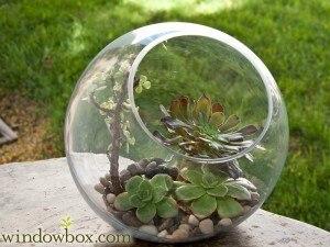 3pcs Set Round Globe Moss Succulent Terrarium Bowl Planter Terrarium