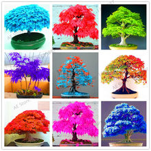 50pcs,Mini mixed colors Japanese maple tree flores DIY Bonsai plant for office,balcony,bedroom,and home garden.(China)