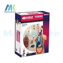 4D Master Human body assembled medical human anatomy transparent body anatomical model
