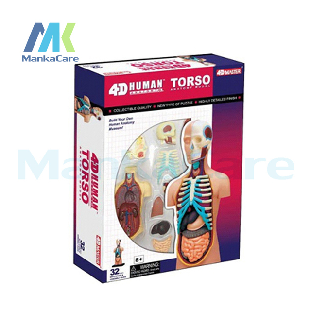 4D Master Human body assembled medical human anatomy transparent ...