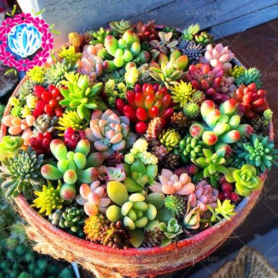 100pcs מצביע פנינה פנינה זרעי חרוזים - מוצרים גן