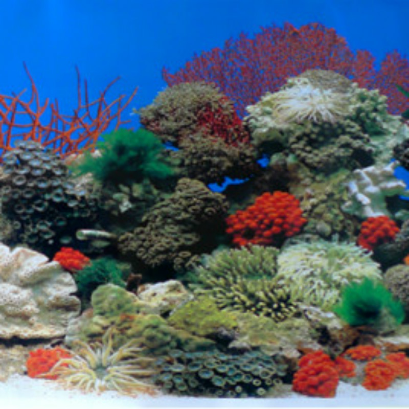 Height 30 40cm waterproof aquarium fish tank decoration for Aquarium background decoration