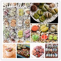 Rare-Mix-Lithops-Seeds-200-particles-Succulent-Cactus-Organic-Garden-Bulk-Seed-Living-Stones-Easy-To.jpg_200x200