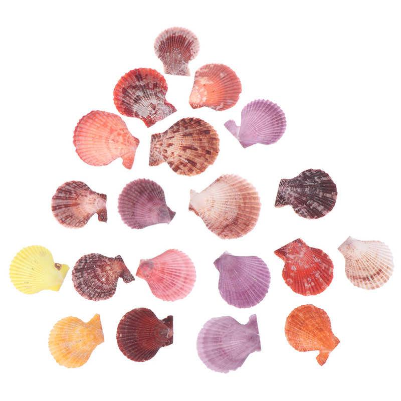 20 個のカラフルなナチュラル貝殻装飾ホタテ殻工芸品の装飾オーナメント