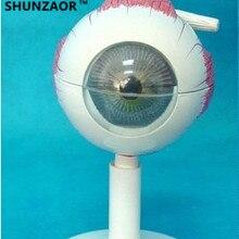 SHUNZAOR 11*11*12 см 250 г с 6 частями 3 раза Анатомия глаз модель структуры глаз модель обучения экспериментальная модель