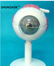 SHUNZAOR 11*11*12cm 250g with 6 parts 3 times Eye Anatomy Model   eye structure model Teaching Experimental Model