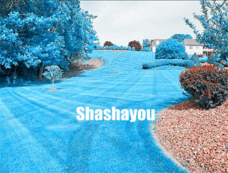 1000pcs Lawn Grass bonsai(zoysia Tenuifolia) Blue Lawn plants Flower plants Japanese Weed plants Outdoor Plant Home Garden Decor
