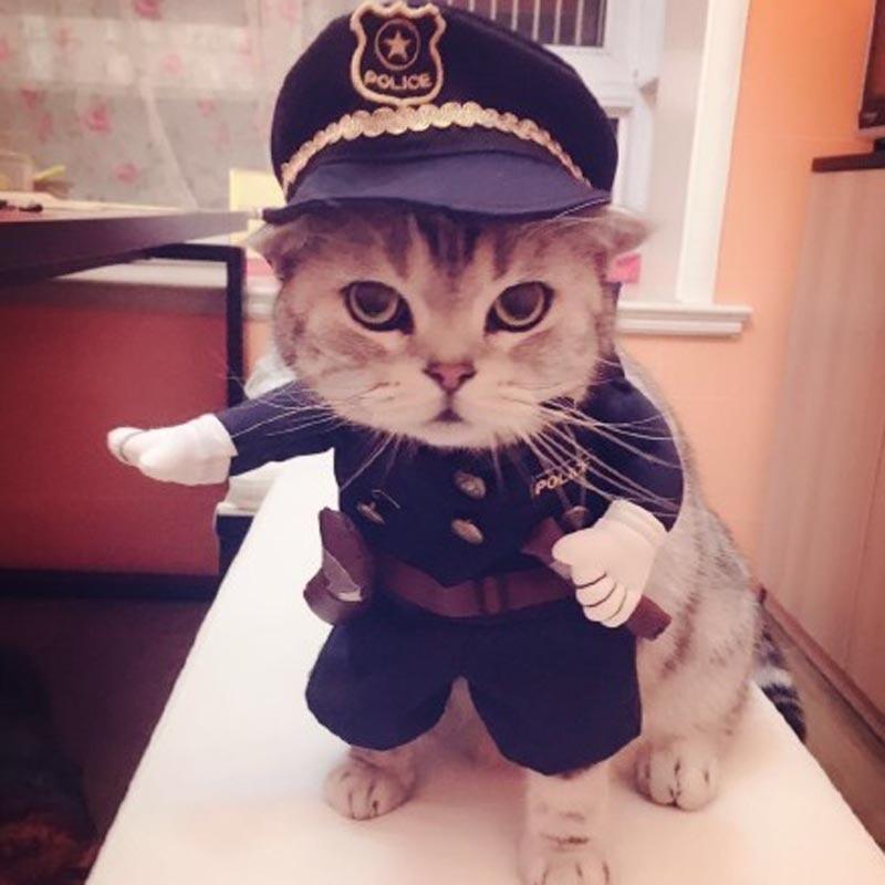 Discussion générale - Page 32 Humor-Halloween-pet-cat-dog-cosplay-traje-de-polic-a-con-perro-sombrero-de-polic-a