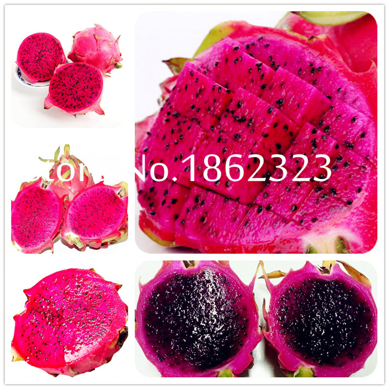 Free Shipping 100pcs Red Pitaya Bonsai Dragon Pitaya Fruit Garden Bonsai Tree Fruit-tree-plant Delicious Tropical Fruit Food Pot