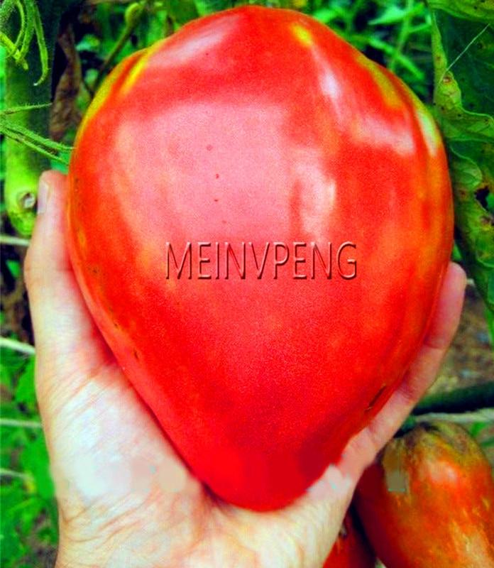 Ægte! 100% ægte Rød 'Ox-horn hjerte' tomat, Frugt Bonsai, 100 have / emballage, sjældne jordbær tomater plante miljøvenlig Vegetabilsk ...