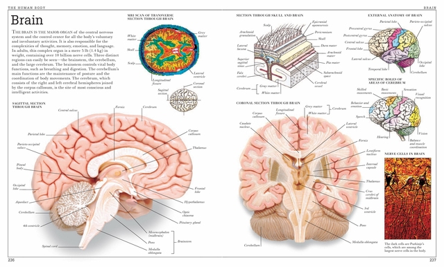 Vintage Human Anatomy Encyclopedia Poster Brain Classic Canvas