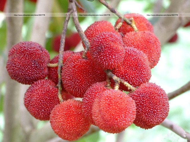 chinese fruit trees reviews  online shopping chinese fruit trees, Beautiful flower