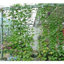 Nylon Trellis Netting Plant Support For Climbing Plants Vine Veggie 1.8X1.8M Garden Plants Vegetables Supplies