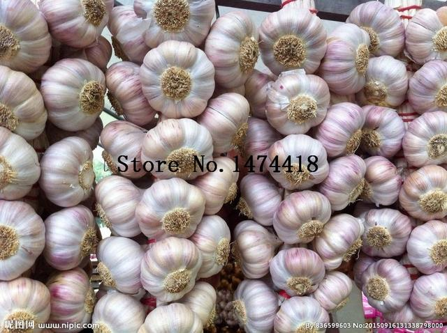 hot sale 100pcs garlic seeds healthy and delicious pungent spice vegetable seeds pure natural and organic