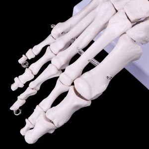 Image 3 - Medical props model Free postage Life size Foot Ankle Joint Anatomical Skeleton Model Medical Display Study Tool