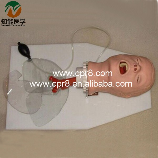 BIX-J50 Airway Training Model,Trachea Intubation Training Model WBW174 iso economic newborn baby intubation training model intubation trainer
