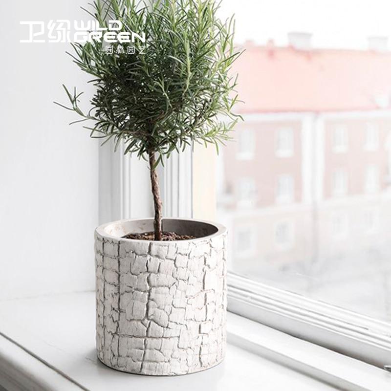 Best Small White Cement Succulent Plant Flower Pot Table