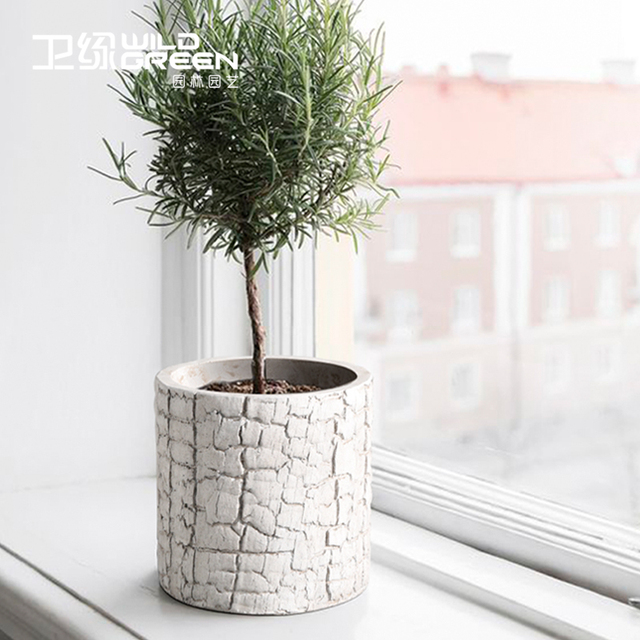 Best Small White Cement Succulent Plant Flower Pot Table Decorative Kitchen Herb Garden Indoor Planter Cactus Container