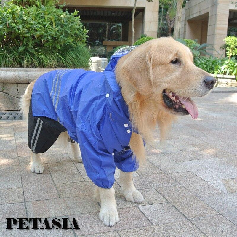 собака пальто дождя