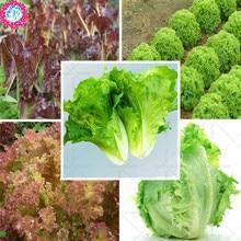 Семена Салата lactvca sativa органические овощи семена четкие листья на компактный средней головки сладкий салаты огород 200 семян
