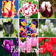 Big Sale, Tulip seeds, tulip flowers, beautiful tulip 19 varieties can pick -10 seeds/pack,#8N2432