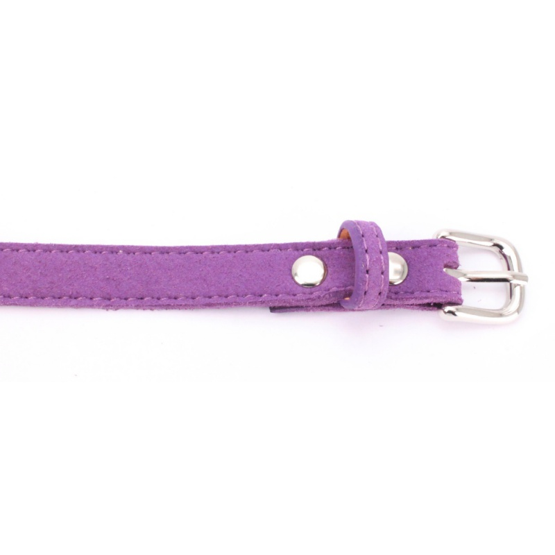 cute small dog harness
