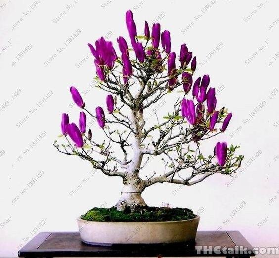 purple house plants