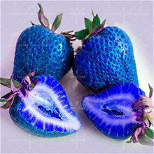 New 200 Pcs 100% Germination Super Giant big Blue Strawberry Fruit Bonsai Apple Size Home Garden Bonsai New store discount(China)