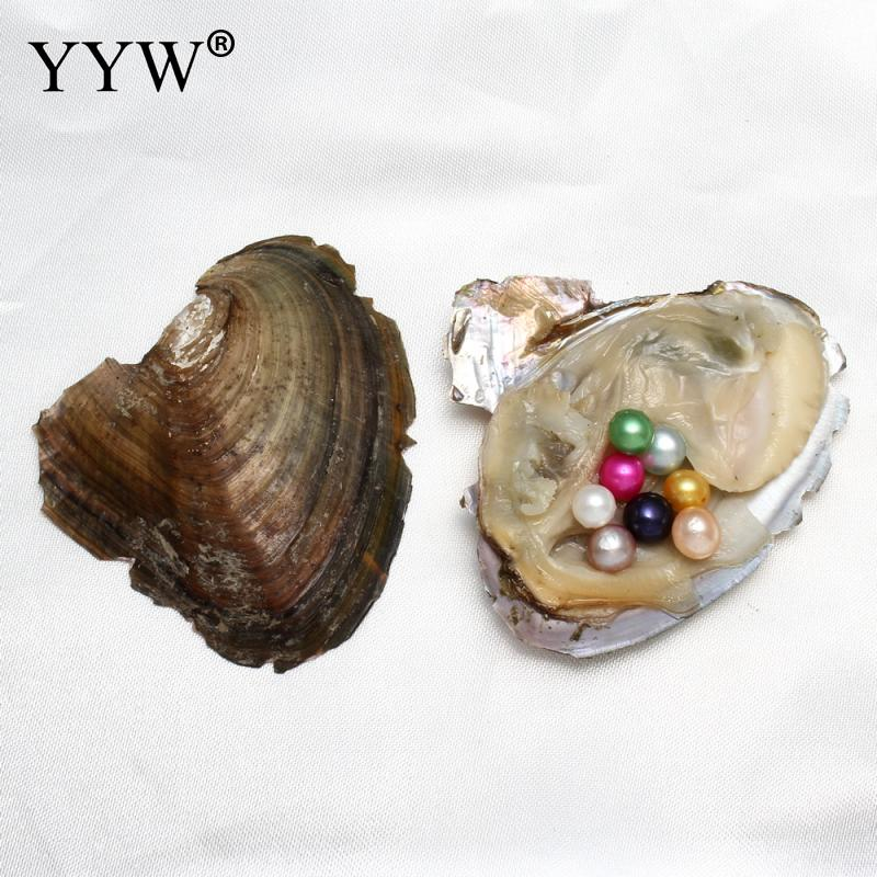YYW 7-8mm Vacuum Pack Oyster Wish Freshwater Pearl Dyed Beads Multi Color Mussel Shell With Pearl Inside Dyed Pearl Beads For DI