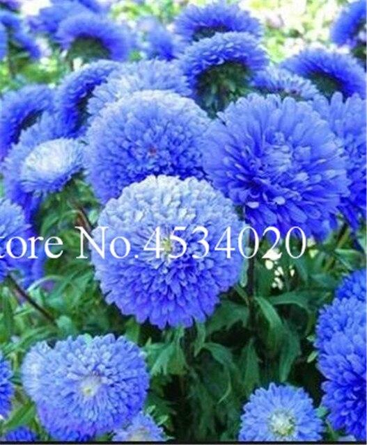 200 pz Aster bonsai fiore bonsai pianta del fiore arcobaleno crisantemo pianta Perenne fiori giardino di casa Piante Ornamentali