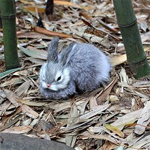 6 15cm Mini Realistic Cute White Plush Rabbits Fur Lifelike Animal Easter Bunny Simulation Rabbit Toy Model Birthday Gift