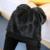 Roupas de Cintura Alta Leggings Engrossado Com Veludo Mulheres Grávidas Leggings Maternidade Roupas de Inverno Calças Calças Quentes B302
