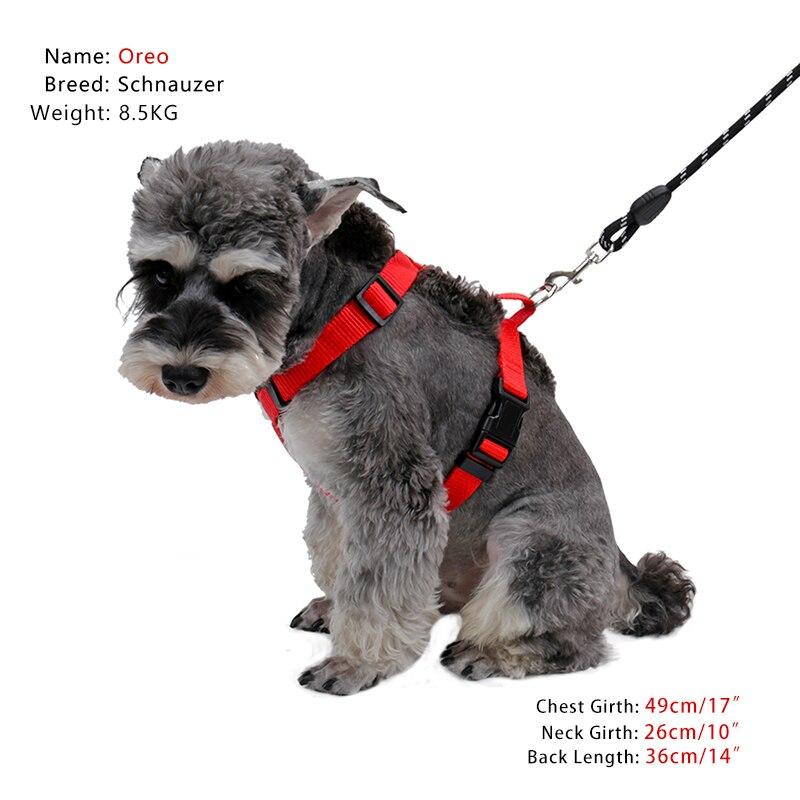Popular Brand Dog Harness 2pcs/lot Durable Nylon Adjustable Chest Strap Vest Leash Set For Cat Small Medium Animal Walking Pet Accessories Superior Materials Harnesses