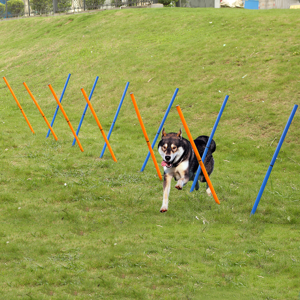 Dog Agility Sports Outdoor Training Poles Dogs Activity