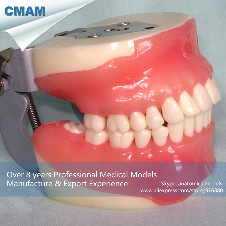 CMAM-DENTAL26 Teaching Practice Model of Oral Surgery, Oral Surgery dental root canal filling practice model dental pulp model teaching model