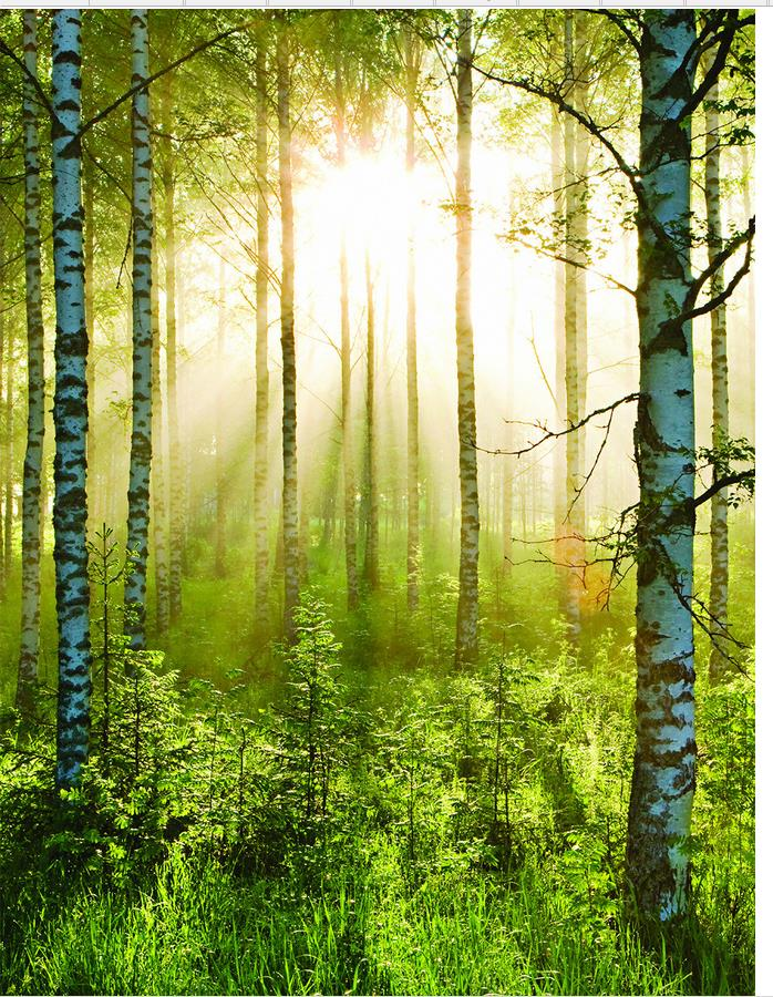 3d Wall Murals Wallpaper Forest Landscape Morning Sun Wallpaper Modern 3d Forest  Wall Mural Home Decoration In Wallpapers From Home Improvement On ... Part 45