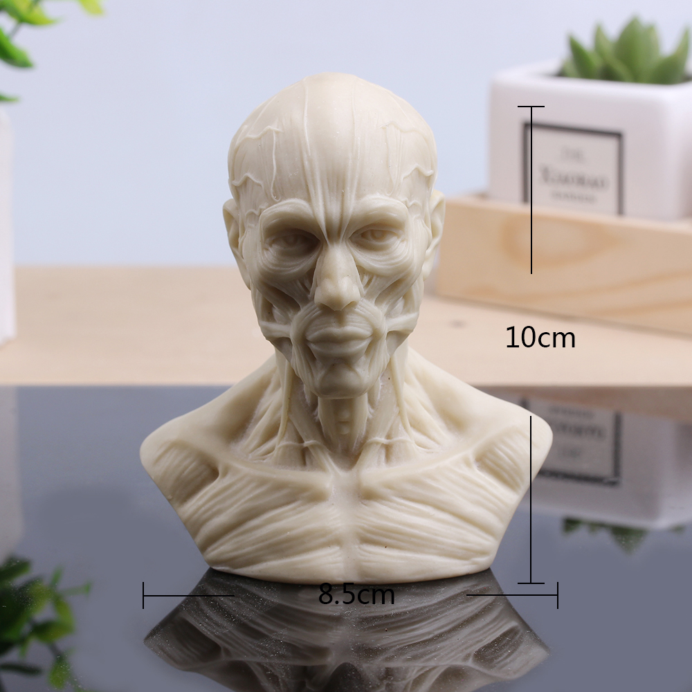 Hi-Q Art Human Body Model Human Muscle Avatars Painting Sketch Head Model Fashion Furnishing Articles Landscape new 2pcs female right left vivid foot mannequin jewerly display model art sketch