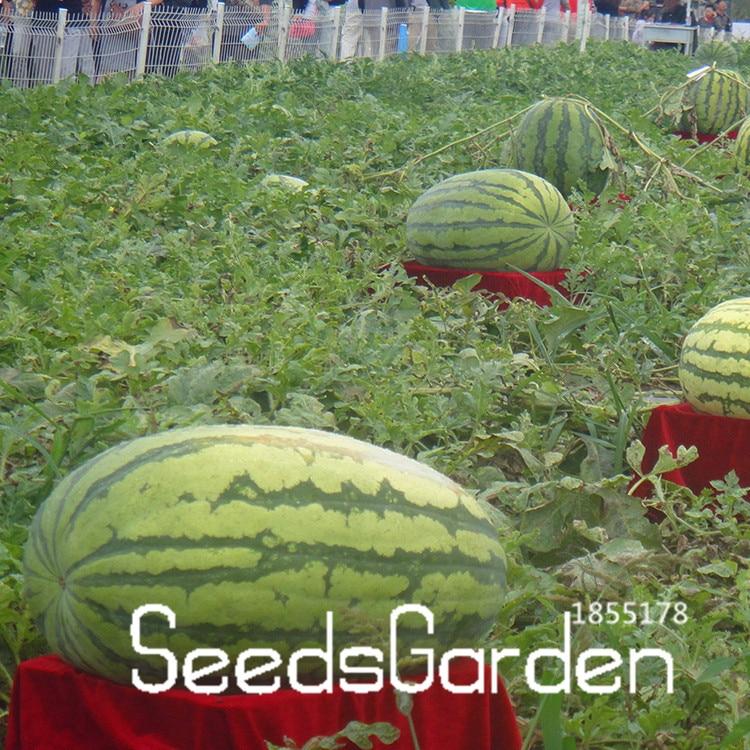 Time-Limit!!A Package 30 Pieces Giant Watermelon Seeds Fruit Seeds Planting Watermelon Seeds NON-GMO Edible Fruits,#5LB2JT