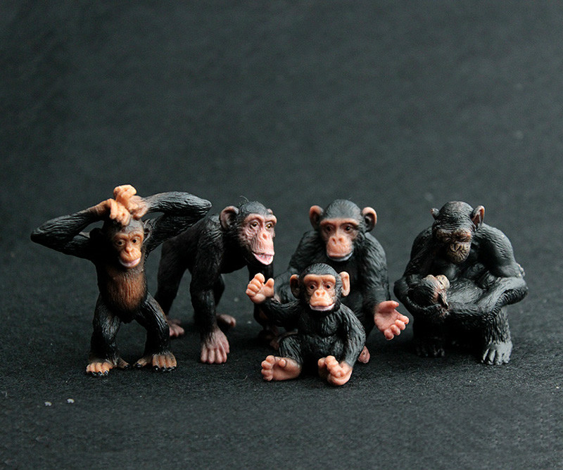 Image result for A Collection of Chimpanzees