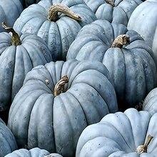 20 штук Орнамент Тыквы растения красочные Cucurbita Pepo Органическая декоративные тыквы фрукты овощи растения для дома сад