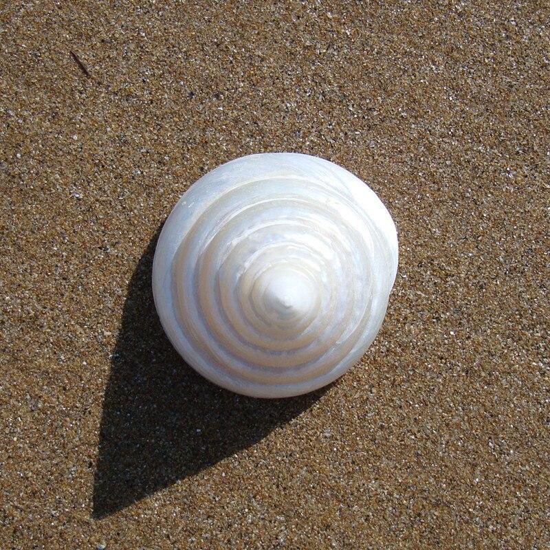 4pcs Ab White Nautilus Fossil Snails Seashell Ammonite Flat Round Spiral Coin Cz