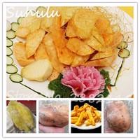 20Seeds-bag-Sweet-Potato-seeds-Organic-Delicious-Sweet-Fruit-and-Vegetable-Seeds-Batata-Mameya-by-Prorganics.jpg_200x200
