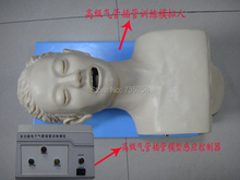 Electronic Tracheal Intubation Simulator,Advanced Electronic Human Trachea Intubation Training Model