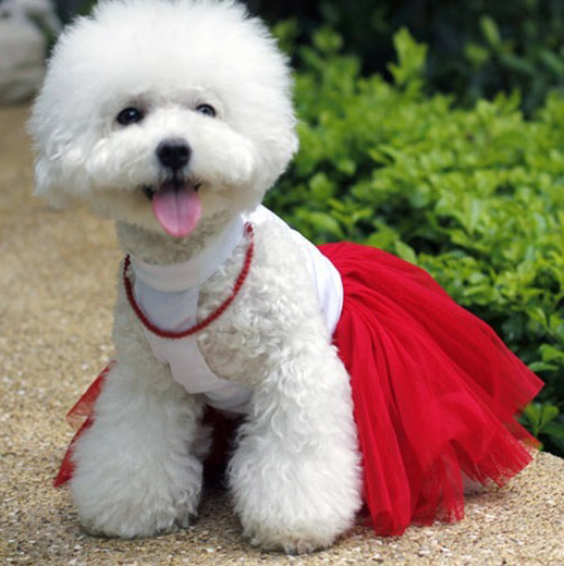Aliexpress.com : Buy White Dog Wedding Dress with Necklace Puppy ...