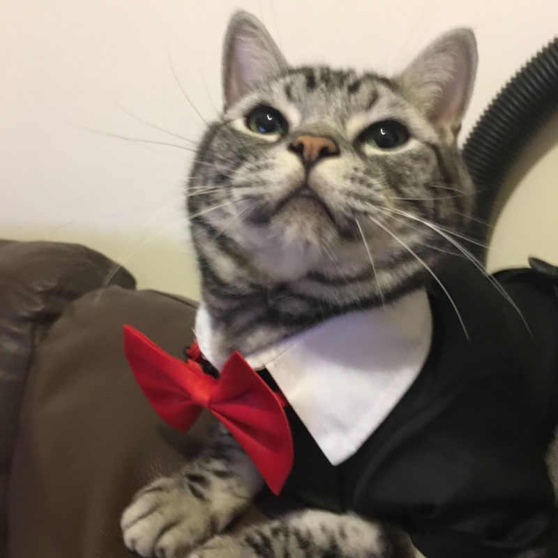 Pet mężczyzna pies kot suknia ślubna chłopiec pies kot smokingowe garnitury szczeniak i kotek ubrania ślub kostium imprezowy dla jamnika shih tzu
