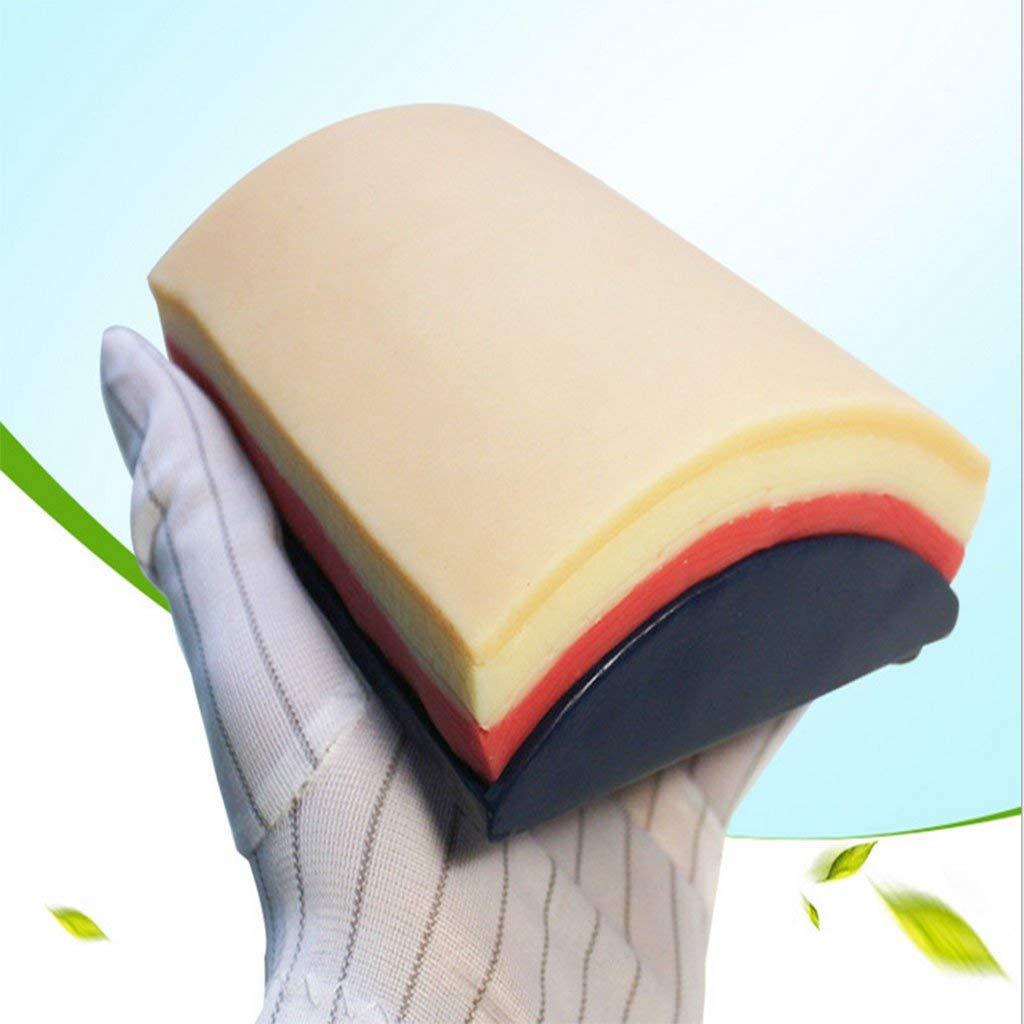 Modèle de Simulation de graisse musculaire de peau humaine en caoutchouc de Silicone pour outil d'enseignement scolaire fournitures de laboratoire médecins pratique infirmière